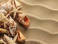 Sea shell on sand - PhotoDune Item for Sale