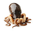 Octopus on white background - PhotoDune Item for Sale