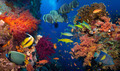 Coral and fish - PhotoDune Item for Sale