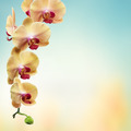 yellow flowers orchids isolated on white - PhotoDune Item for Sale