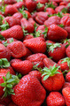 Many strawberries - PhotoDune Item for Sale