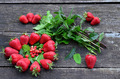Cultivated and wild strawberries - PhotoDune Item for Sale