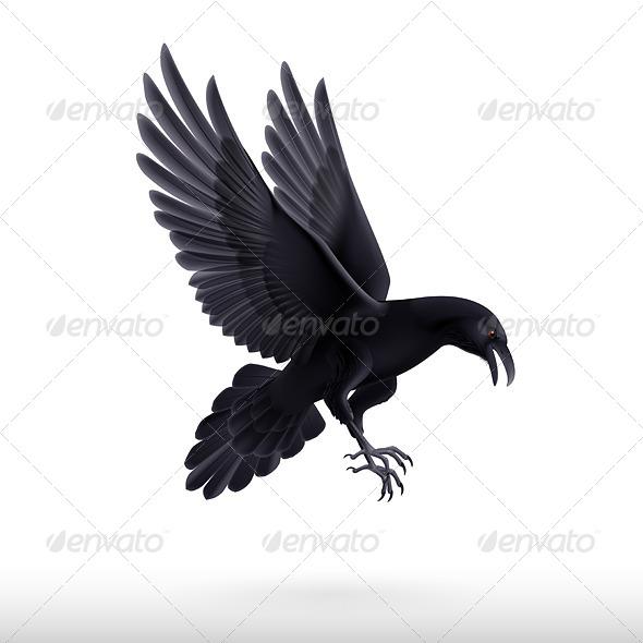 GraphicRiver Black Raven 8045906