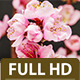Peach Flower 2 - VideoHive Item for Sale