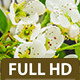 Pear Flower 2 - VideoHive Item for Sale