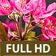 Purple Prince Crabapple - VideoHive Item for Sale
