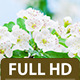 Thornapple Flower - VideoHive Item for Sale