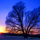Lone Tree at Sunset in Valley Forge National Park - PhotoDune Item for Sale