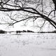 Tree and Snow Field at Valley Forge National Park - PhotoDune Item for Sale