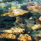 Rocks in the Sea - VideoHive Item for Sale