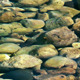 Stone Rocks Under the Sea - VideoHive Item for Sale