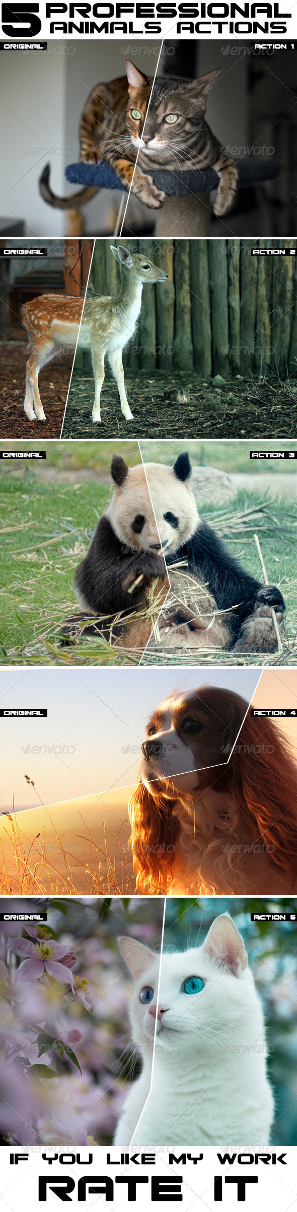 GraphicRiver 5 Professional Animal Photoshop Actions 8017482