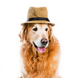 Retriever in hat - PhotoDune Item for Sale