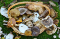 Edible mushrooms - PhotoDune Item for Sale