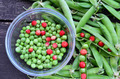 Shelled peas and wild strawberries - PhotoDune Item for Sale