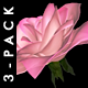 Flying Roses - Pack Of 3 Transitions - VideoHive Item for Sale