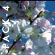 Cherry Blossoms - HD Pack 4 - 138