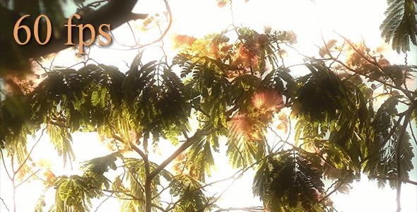 Dreamy Nature 2