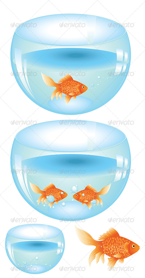 GraphicRiver Gold Fish in Aquarium 8059239