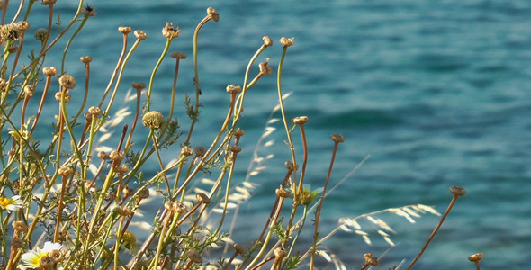 Dry Plant and the Sea