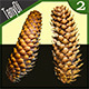 Pine Cones - GraphicRiver Item for Sale