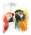 Watercolor Image Of  Parrots - PhotoDune Item for Sale