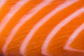 Close up of salmon fillet. Macro - PhotoDune Item for Sale