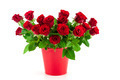 bouquet of bright red roses in a red bucket