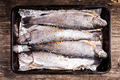 trout for baking - PhotoDune Item for Sale