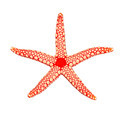 Pearl sea star - PhotoDune Item for Sale