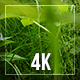 Motion Through Greens - VideoHive Item for Sale