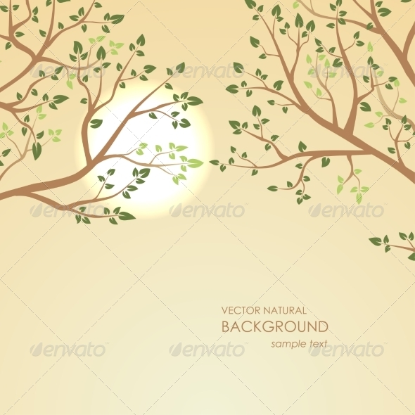 GraphicRiver Sunset on a Background of Tree Branches 8076034