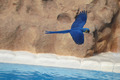 Blue Colored Tropical Parrot - PhotoDune Item for Sale
