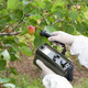 Measuring Radiation Levels of Fruits     - PhotoDune Item for Sale