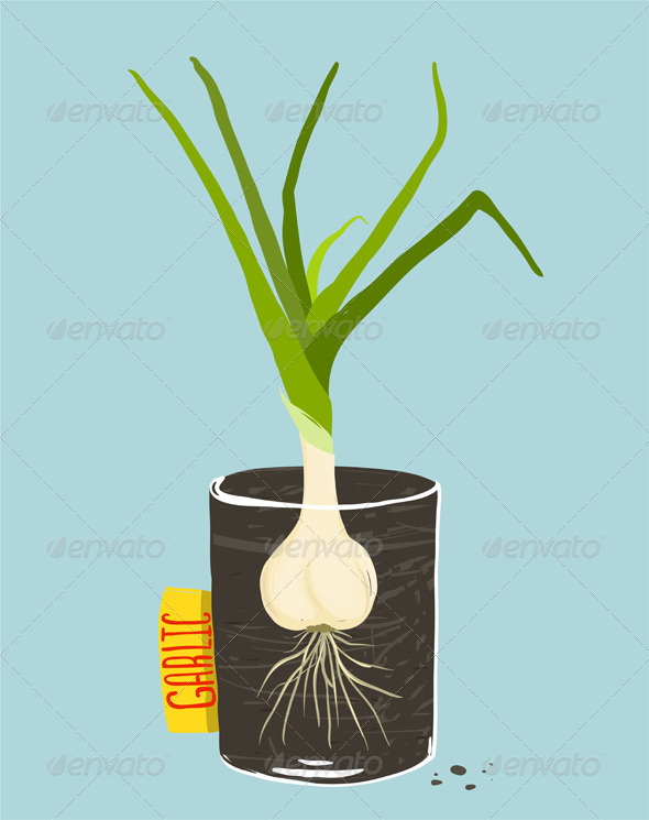 GraphicRiver Growing Garlic with Green Leafy Top in Mug 8085183