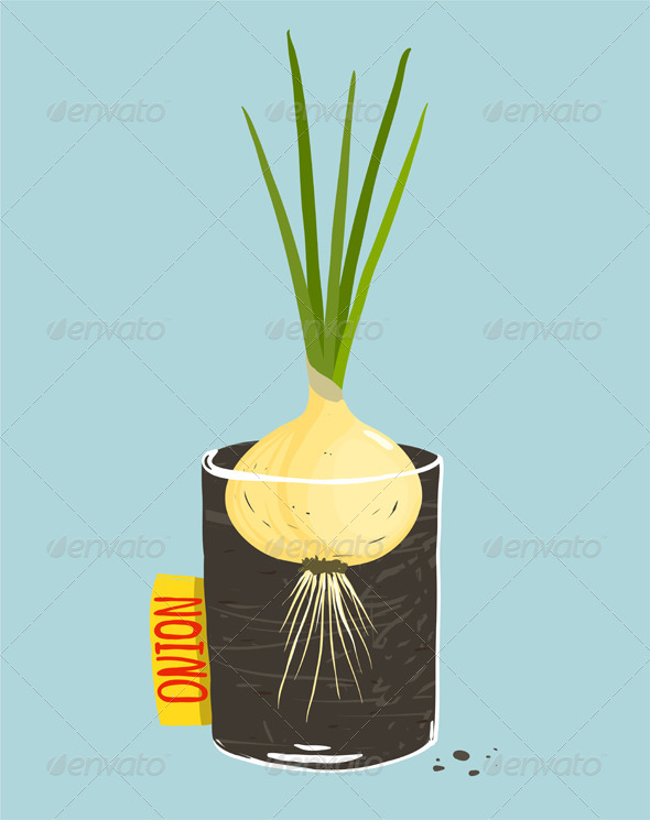 GraphicRiver Growing Onion with Green Leafy Top in Container 8085194