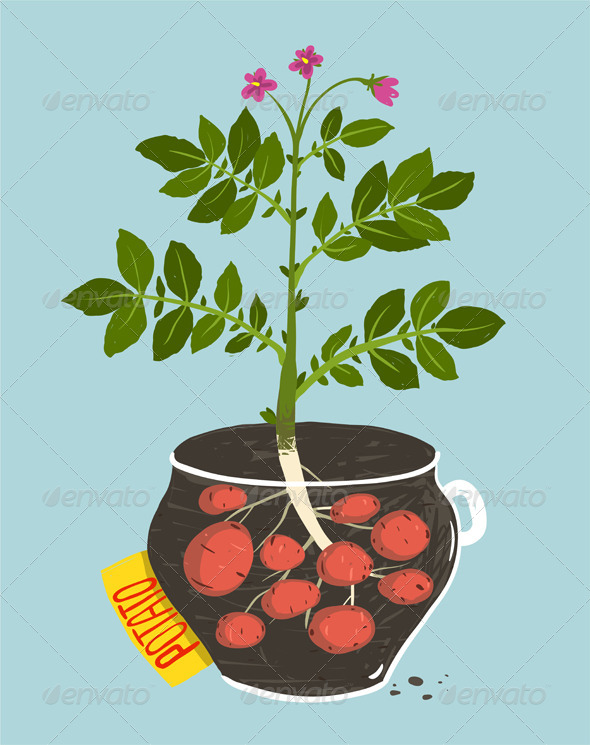 GraphicRiver Growing Potato with Green Leafy Top in Pot 8085203