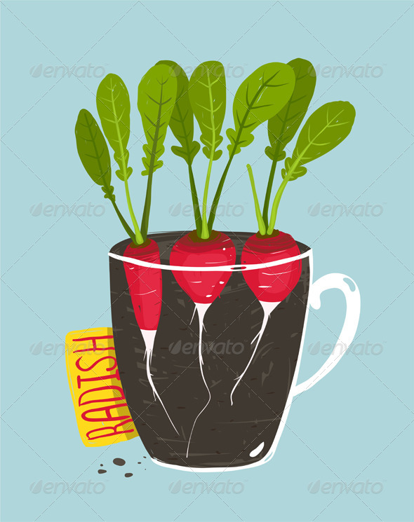 GraphicRiver Growing Radish with Green Leafy Top in Pot 8085206