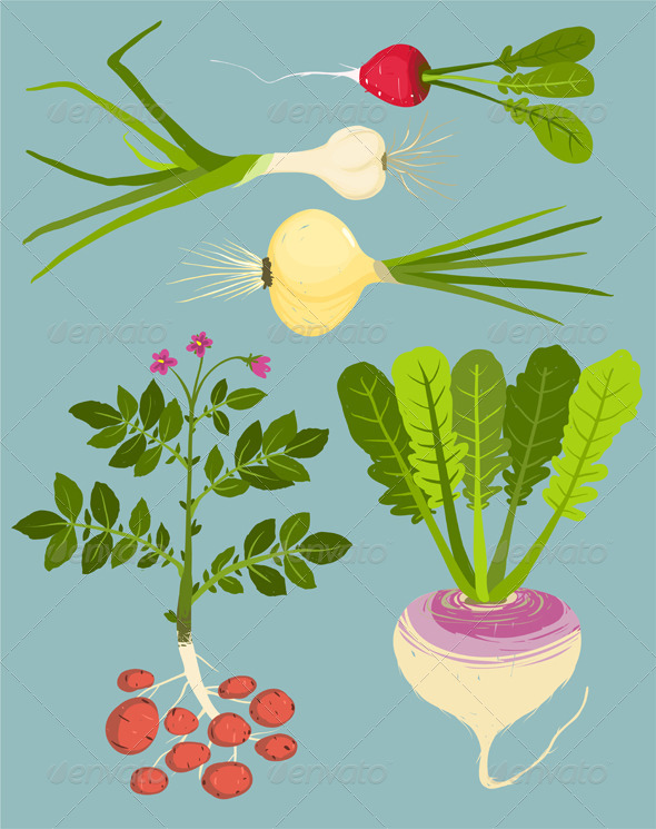 GraphicRiver Growing Root Vegetables with Greens Collection 8085214