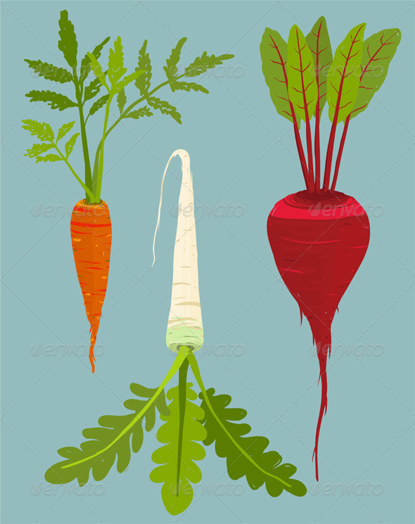 GraphicRiver Growing Root Vegetables Set with Green Leafy Top 8085227
