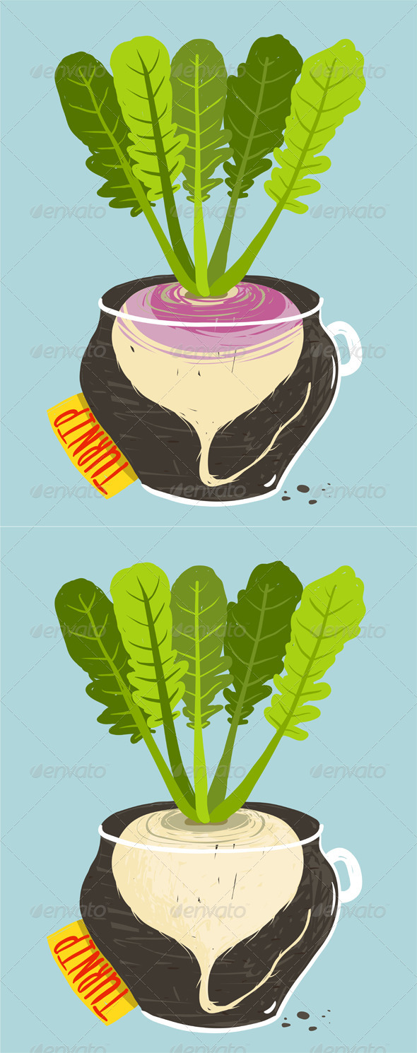 GraphicRiver Growing Turnip with Green Leafy Top in Container 8085329