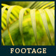 Green Leafs 24 - VideoHive Item for Sale