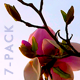Cherry Blossoms - HD Pack 4 - 174