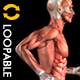 Muscle Map - Male Runner - Loop - VideoHive Item for Sale