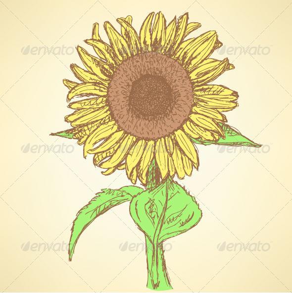 GraphicRiver Sunflower Sketch Background 8099524