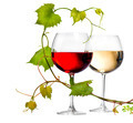 Two glasses of red and white wine decorated with grape leaves - PhotoDune Item for Sale