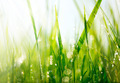 Fresh green grass with dew drops closeup. Soft Focus - PhotoDune Item for Sale