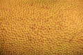 Texture of jackfruit - PhotoDune Item for Sale