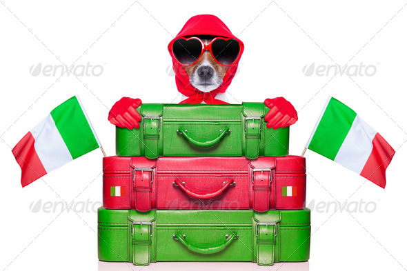 italy dog - Stock Photo - Images