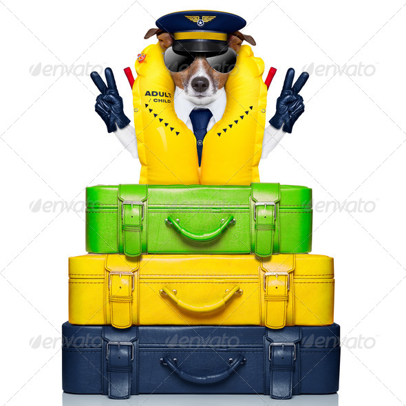 captain dog - Stock Photo - Images